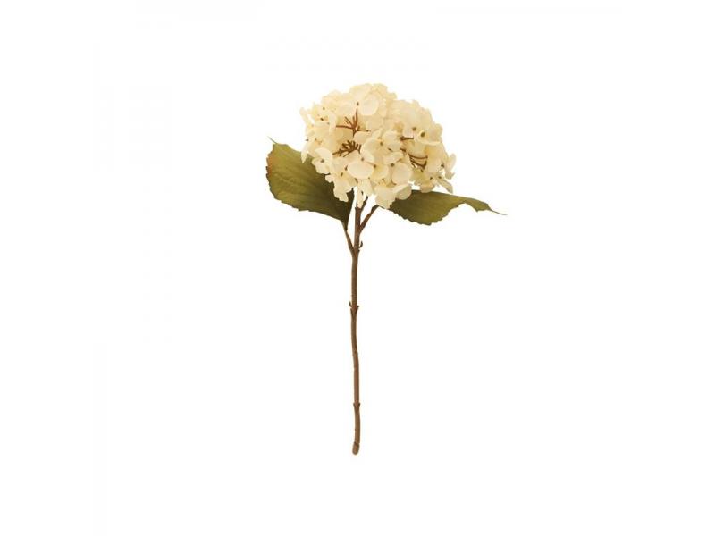 46cm Dried Hydrangea Single - Cream