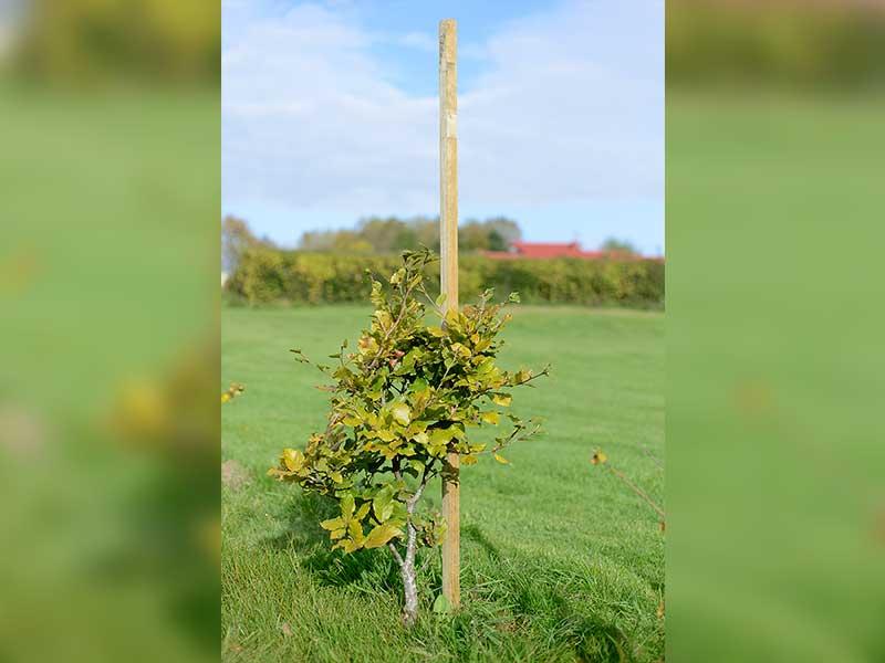 Grange Tree Stakes
