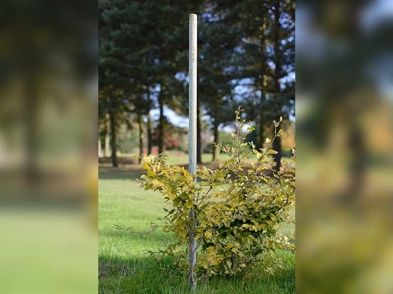 Grange Tree Poles