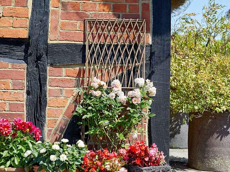 Smart Garden Minster Willow Square Trellis