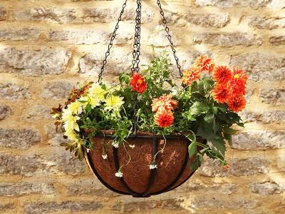 Smart Garden Forge Hanging Basket