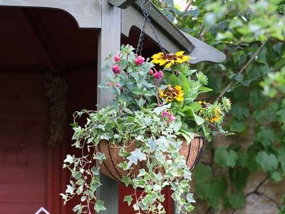Smart Garden Smart Hanging Basket