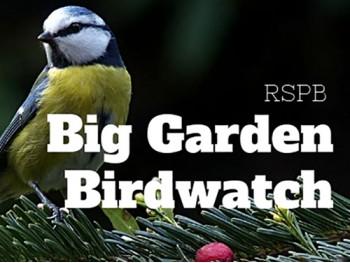 Get set for the Big Garden Birdwatch with Oxford Garden Centre
