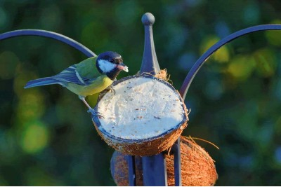 The Best Bird Care Products & Tips For 2021