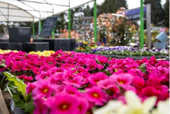 Great Easter Offers at Oxford Garden Centre