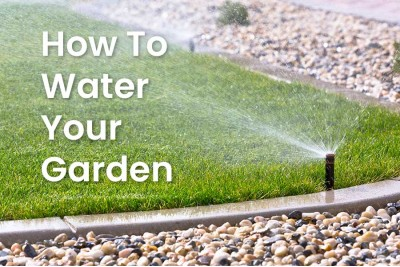 How To Water Your Garden Properly – And Responsibly