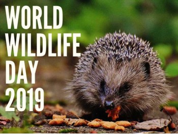 Add Wonder to Your Garden this World Wildlife Day