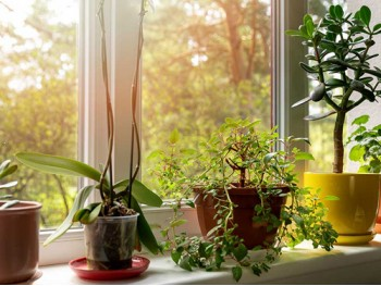 Spruce Up Your Home With Our Range of Houseplants
