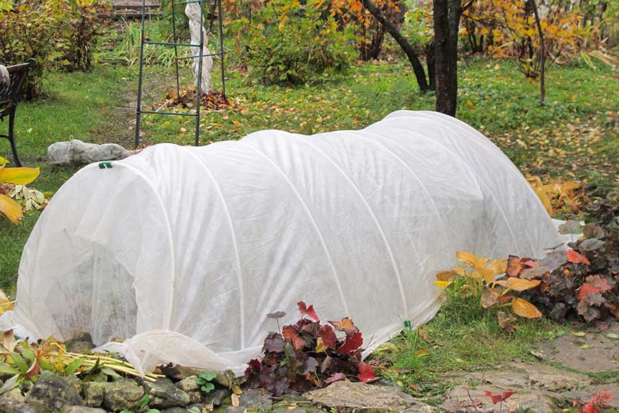 Protect vulnerable plants with a frost fleece